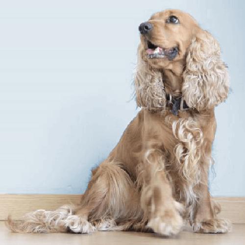 Shiny & Healthy Dog Grooming