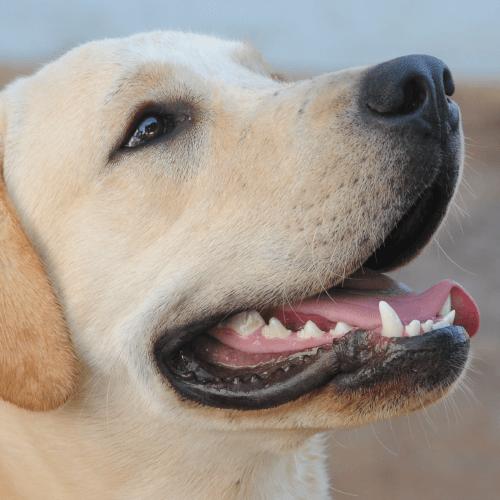 Teeth Cleaning Dog Grooming