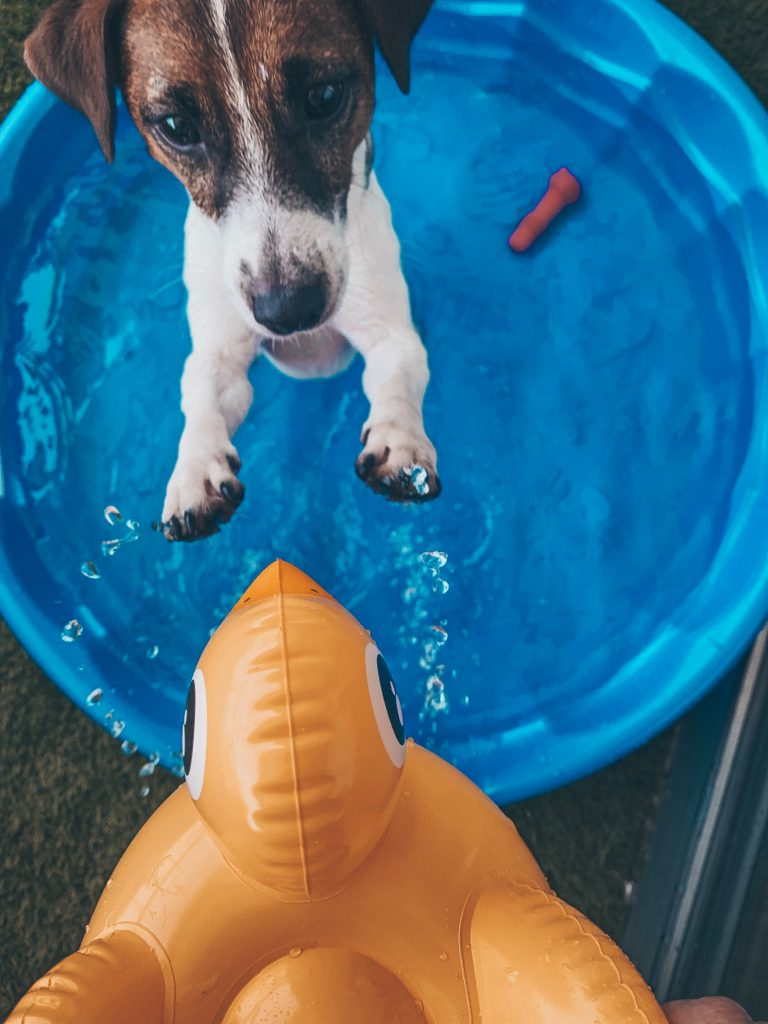Dog washing 101